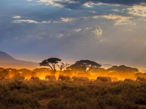 Mullingar travel - Kenya safari & beach holiday